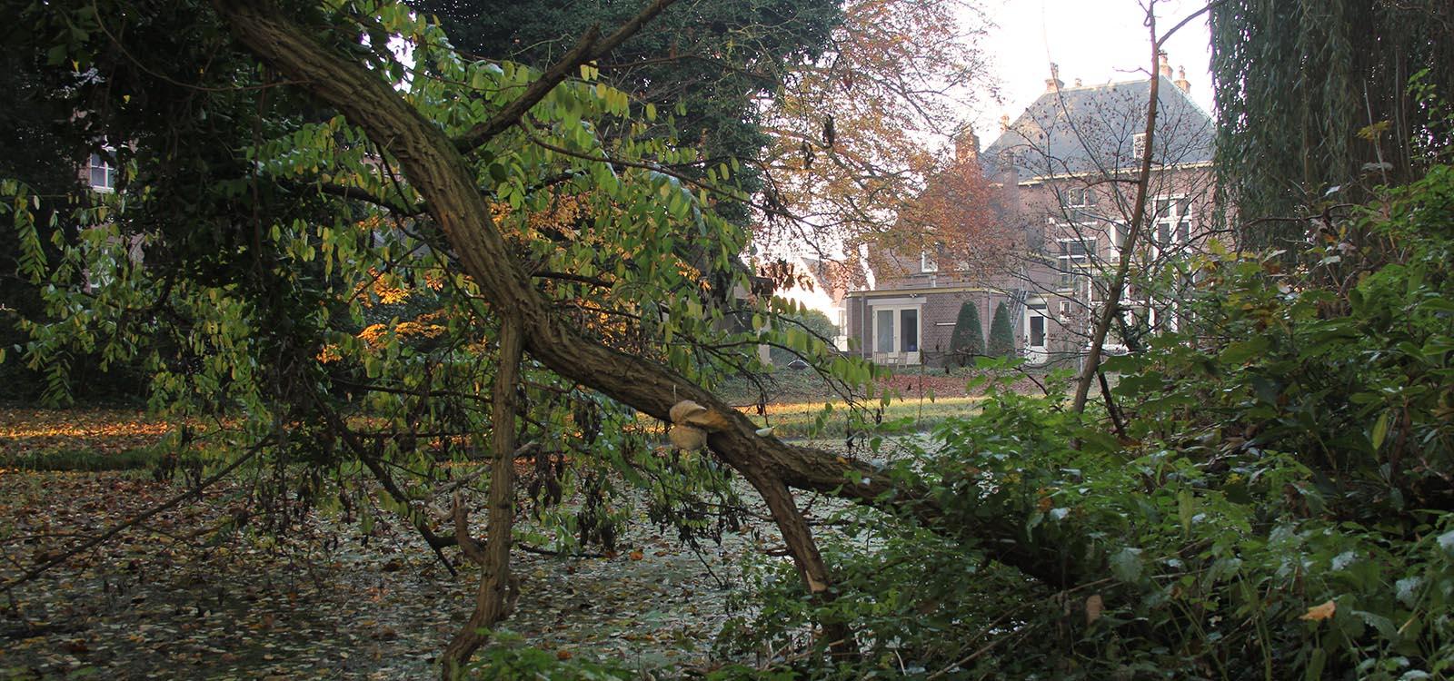 tuin van de pastorie in eindhoven hoogstraat 301